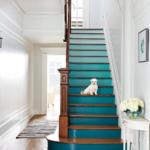 petit chien dans les escaliers