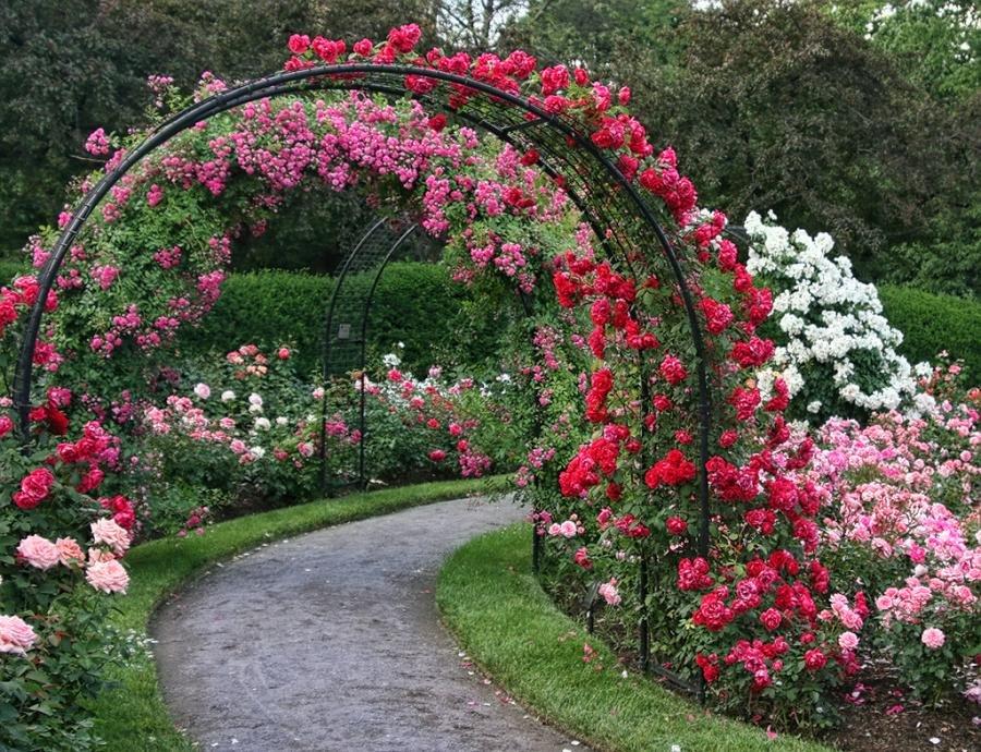 Chaîne de roses sur une arche de jardin de tuyaux en acier