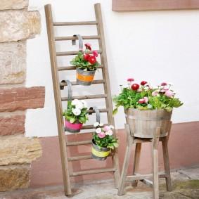 Pots de fleurs sur une échelle