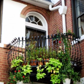 Plantes vivantes sur le balcon ouvert